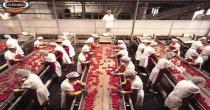 La Doria - Angri: opportunita' di lavoro per la prossima campagna 2015