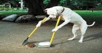 Angri: sanzioni per gli incivili proprietari di cani